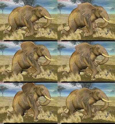 Porn Elephant
